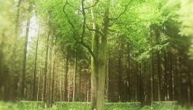 Le Château & son domaine : regards sur la forêt d'Eu